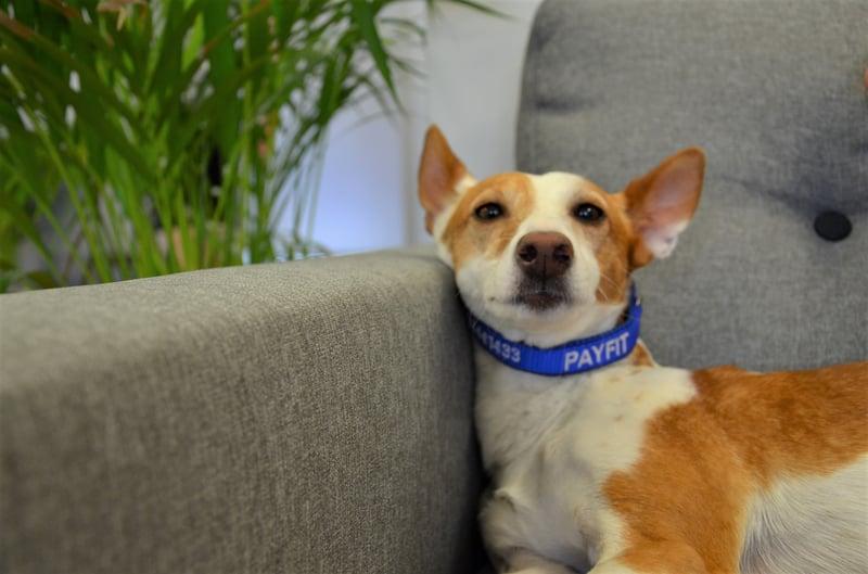 PayFits Office-Hund Kira